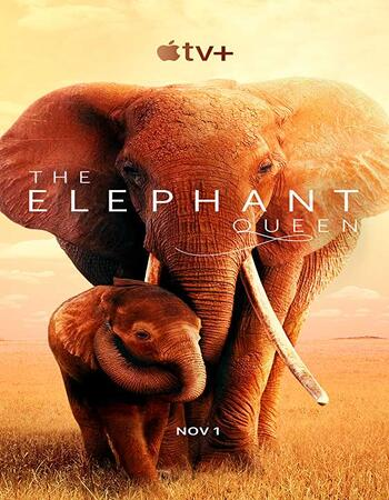 The Elephant Queen (2019) Hindi 720p WEB-DL x264 800MB Movie Download