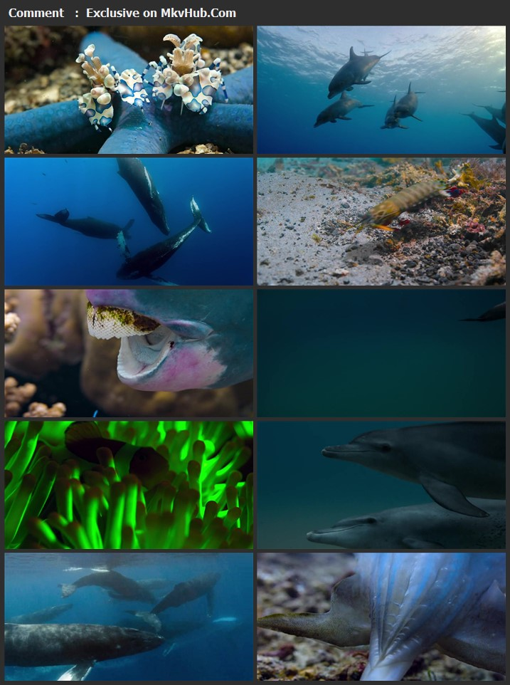 Dolphin Reef 2020 English 720p WEB-DL 650MB Download